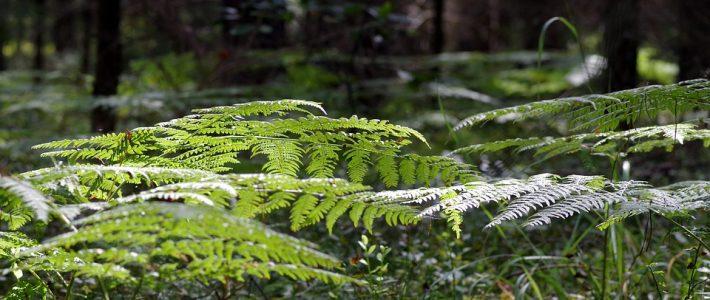 Pflanzenarten und Strukturvielfalt in Wirtschaftswäldern