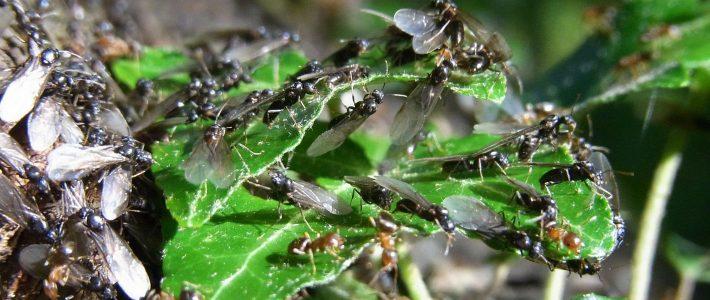 Insektensterben – Studie von Prof. John Holland