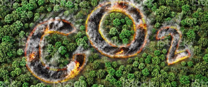 Kampagne 8       – Wald ist Klimaschützer-