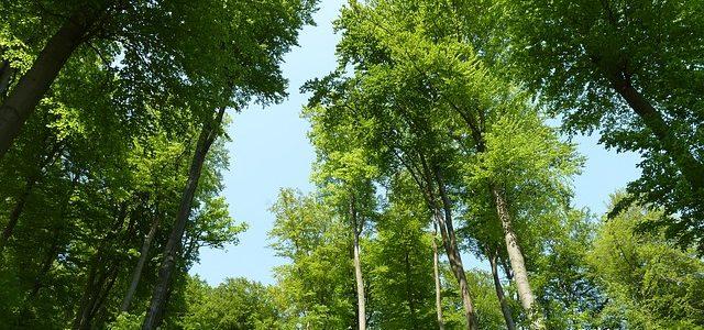 Artenvielfalt im Buchen-Wirtschaftswald ist höher als in einem stillgelegten Wald